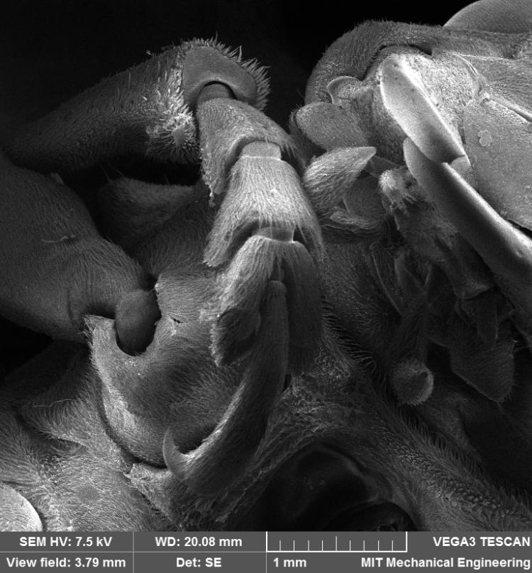 beetle leg